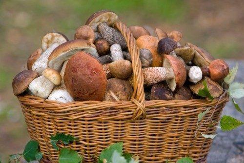 5 отличных рецептов маринованных грибов / Едальня