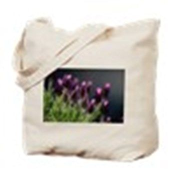 LAVENDER PLANT CARE - Planting, Growing, Caring For Lavender Plants