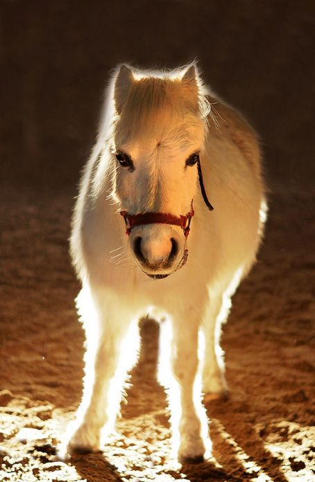 this is a mini horse , not a baby horse. Emmie got Mustang Sally for her 10th birthday. Sally look just like this!    Baby Horse  (by May Whiston)