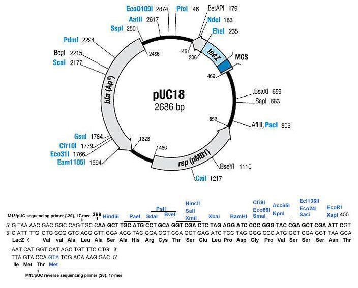 E Coli Diagram Plasmid pUC18 plasmid DNA - Ge...