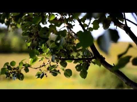Nikon 18-55mm Kit lens vs 50mm 1.8 Prime lens -