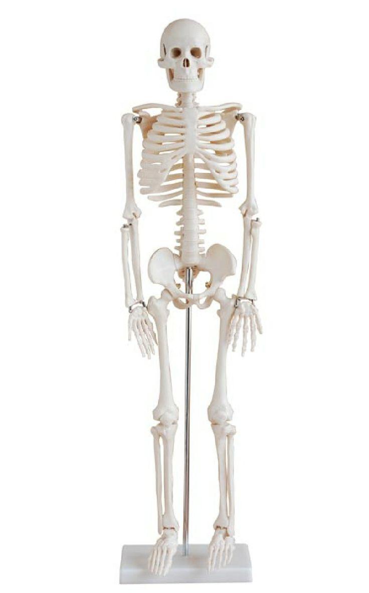 Groß Anatomie Und Physiologie Lehrplan Der High School ...