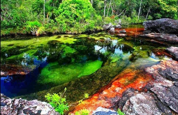 Cano Cristales, the technicolor river |  - Colombia, Republic of Colombia, is a country situated in the northwest of South America - #travel #viajes #nature #naturaleza - Community Post: A Trip Through The Land Of Magical Realism