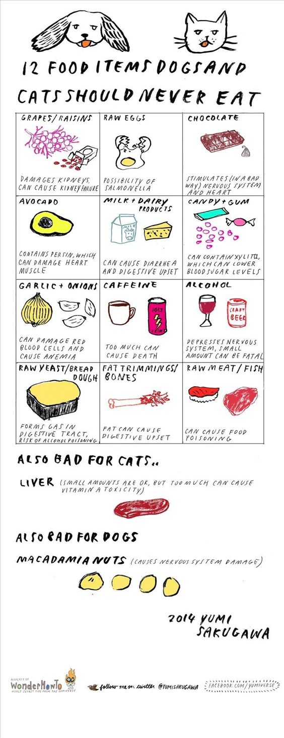 Bad food for dogs and cats