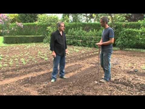 Jardiner : les techniques de semis en place