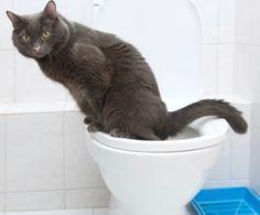 come pulire pipì di gatto