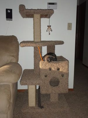 17 best images about cat trees on pinterest cats easy for How to build a simple cat tree