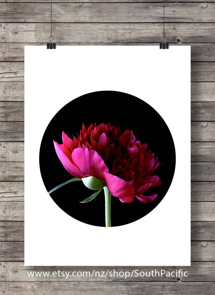 Printable art | Peonies flowers photo | Botanical peony | pink black white floral | photography flower art print | instant download