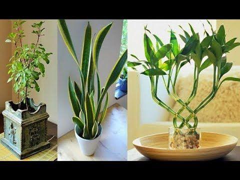 9 Plantas Para Atraer El Dinero La Prosperidad Y El Amor Cuál Vas A Elegir Youtube Plantas Para Atraer Dinero Plantas De Buena Suerte Planta De La Suerte