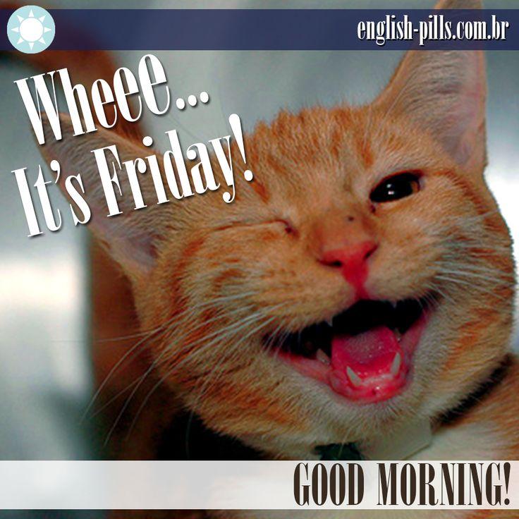 #friday #goodmorning #cat