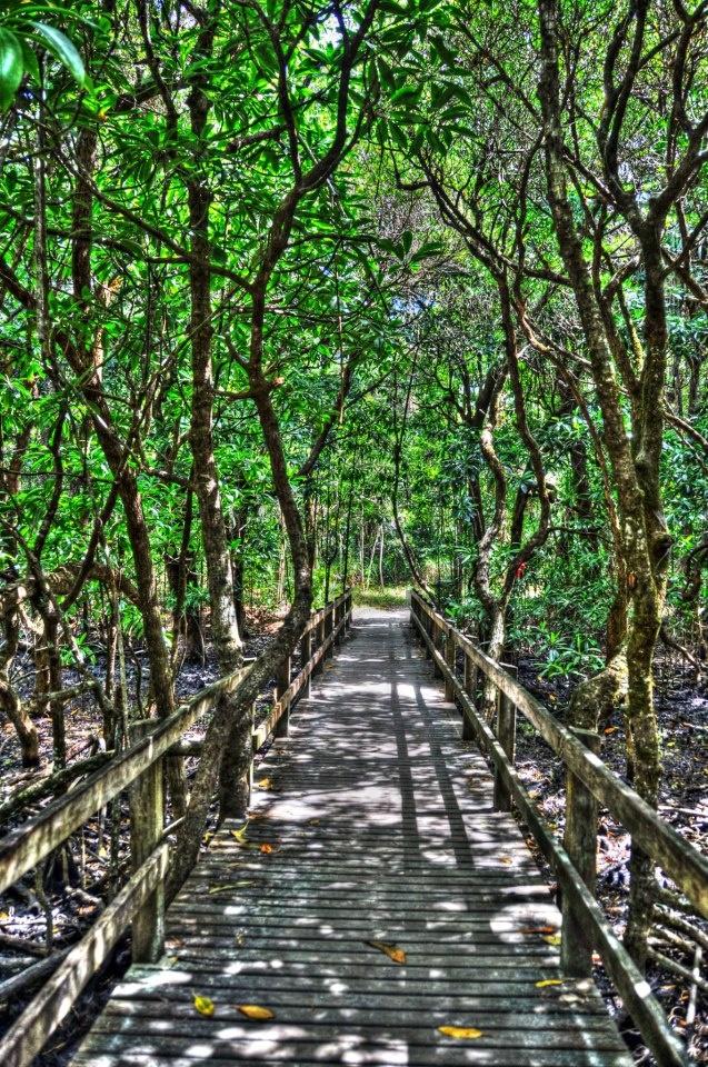 Gianpaolo Freddi | Daintree rainforest, QLD