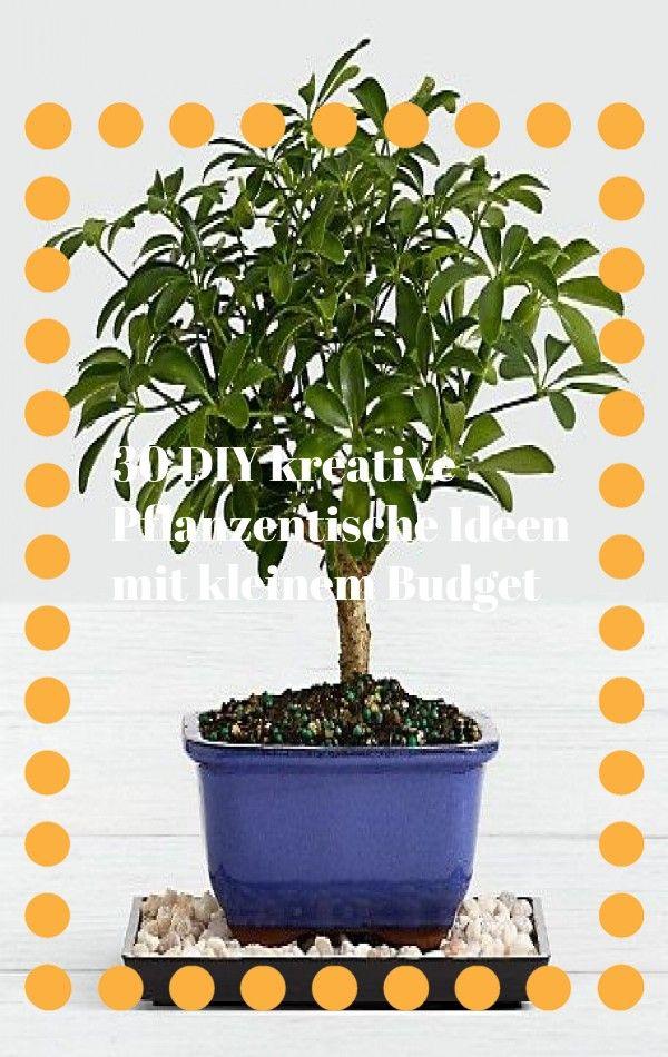 Verwandeln Sie Ihr Badezimmer In Ein Tropisches Paradies Mit Zimmerpflanzen Die Hohe Luftfeuchtigkeit Im Durchschnittlichen Ba In 2020 Plants Peacock Plant Plant Care
