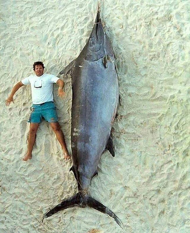 Mejores 23 imágenes de Fish en Pinterest   Ir de pesca, Pez y Piscis