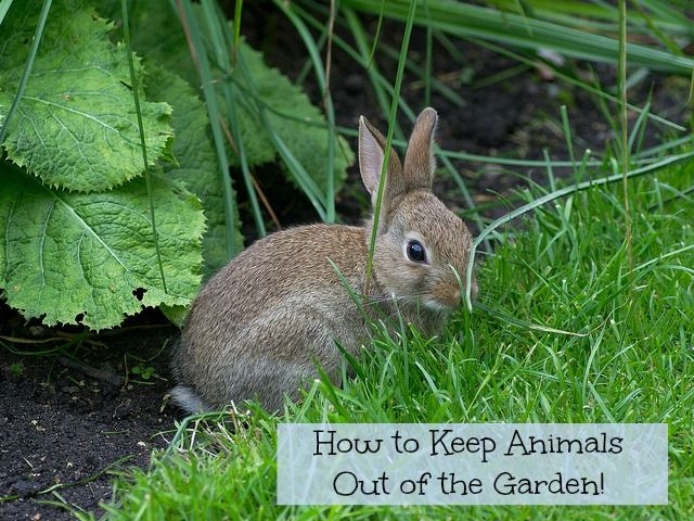 How to keep animals out of the garden gardens the o for How to protect your garden from animals