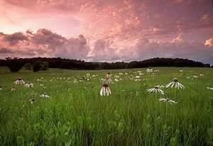 Reminds me of the Kansas prairie setting where the story takes place. Love the color of the sky!