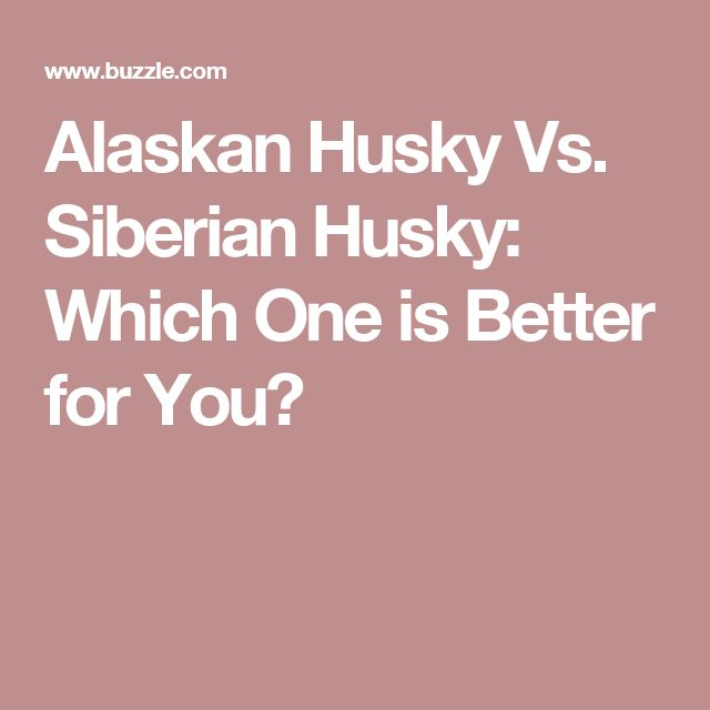Alaskan Husky Vs. Siberian Husky: Which One is Better for You?