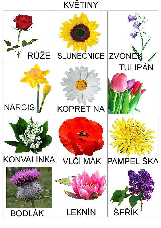 Pro Štípu: Rostliny