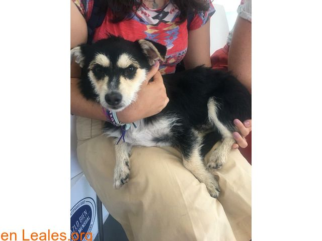 Perros Encontrados Espana Las Palmas Gran Canaria
