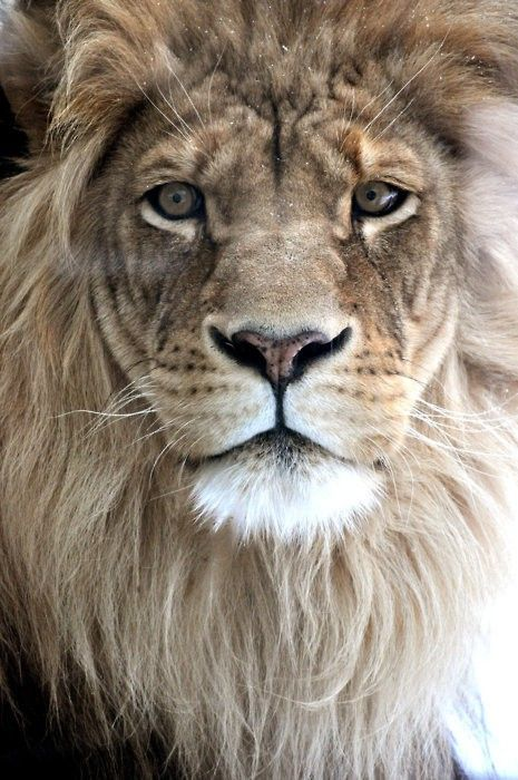 Proverbs 19:12 - The king's wrath [is] as the roaring of a lion; but his favour [is] as dew upon the grass.