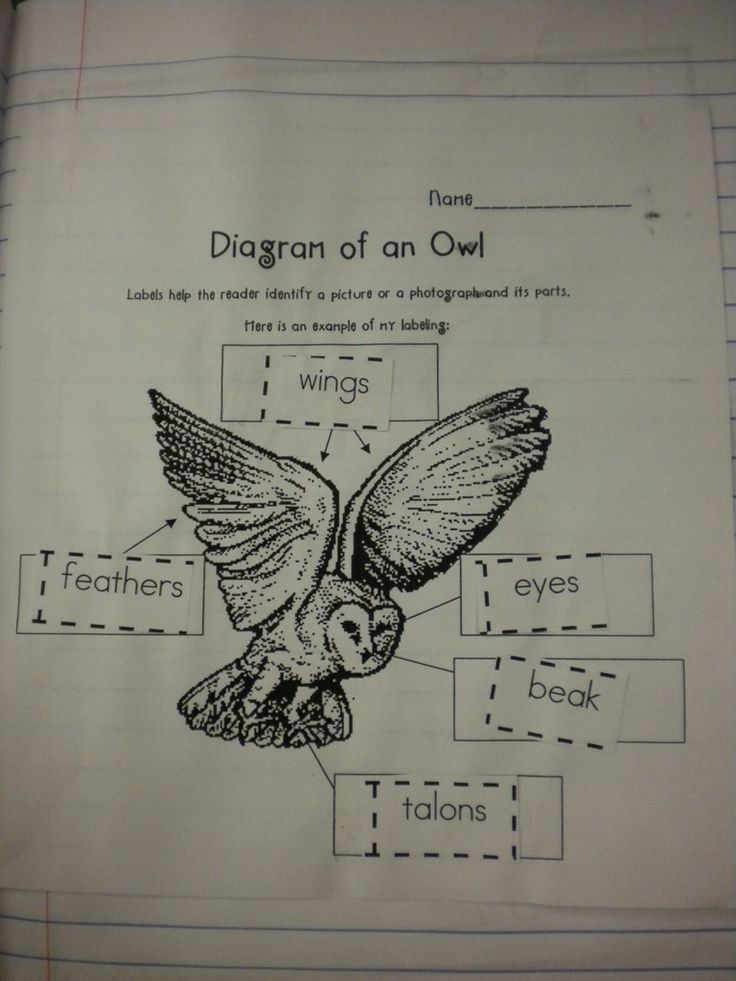 Label parts of an owl