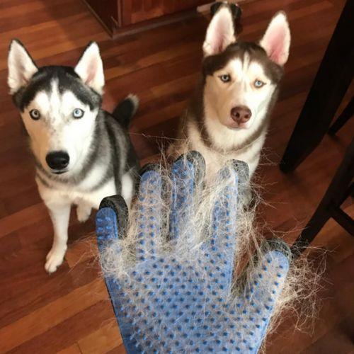 Pet Shedding Gloves