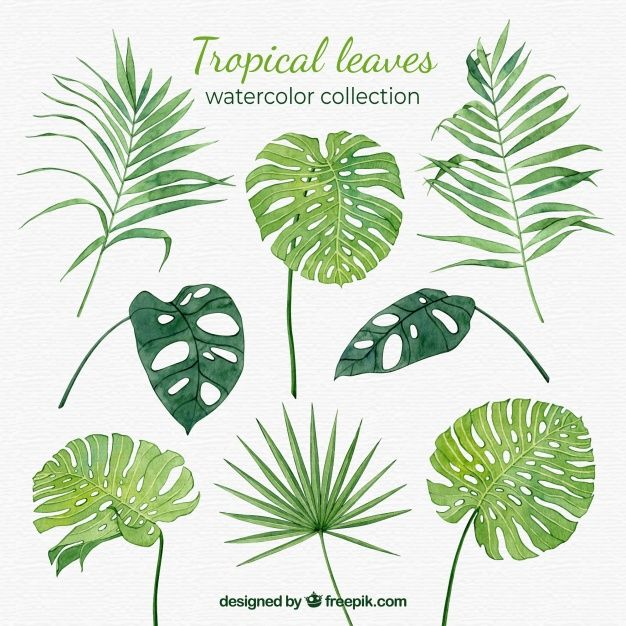 Tropical Leaves Watercolor Vector Tropical Leaves Illustration