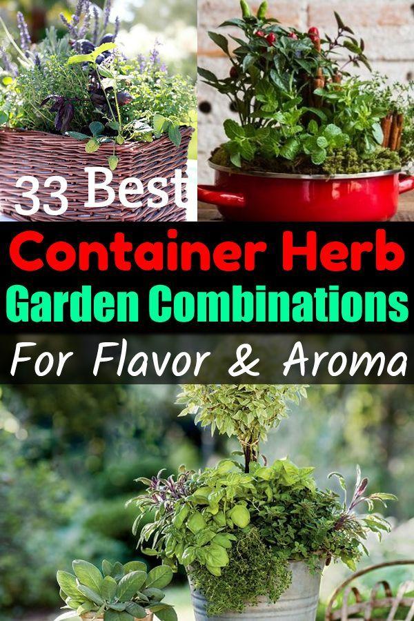 33 Best Container Herb Garden Combinations For Flavor Aroma Container Herb Garden Cooking Herbs Herb Garden