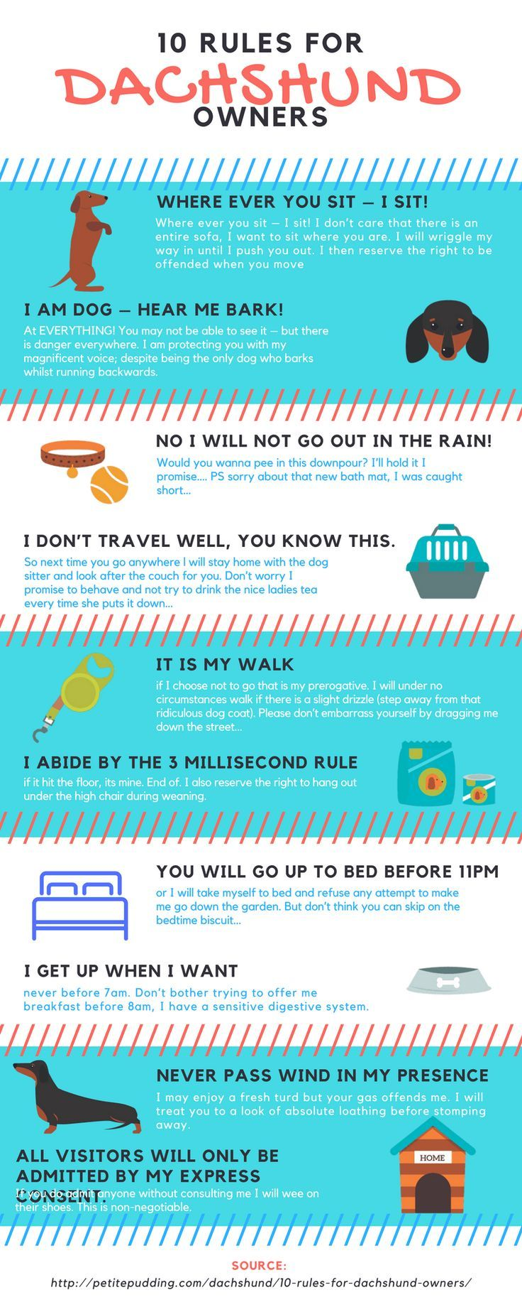 In all honesty you don't own a dachshund a dachshund owns you! Here are our top 10 rules as written by a human owned by a dachshund!