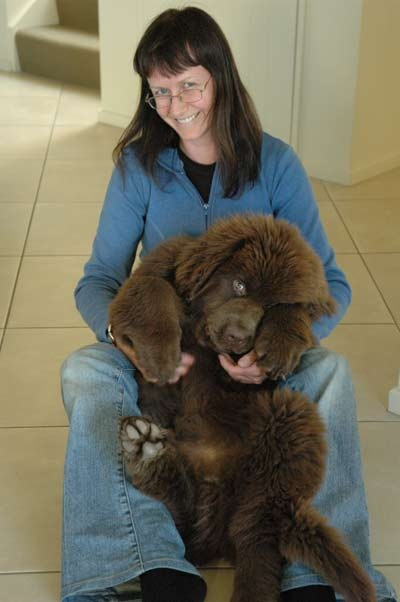 Newfoundland puppy, He's like a little bear!