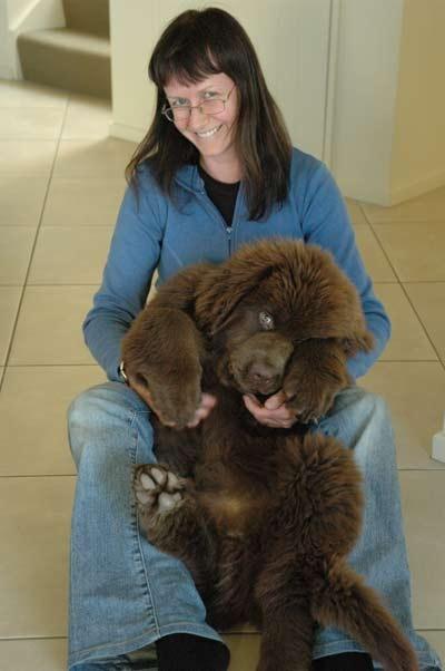 my hubby says no... can you believe it newfoundland dog | Newfoundland dog pics