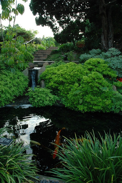 Koi pond and little waterfall deep in the self realization for Japanese garden meditation