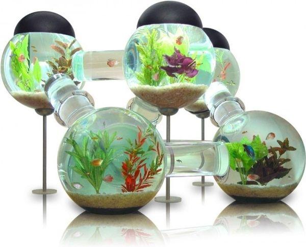 Amazeballs fish tank!