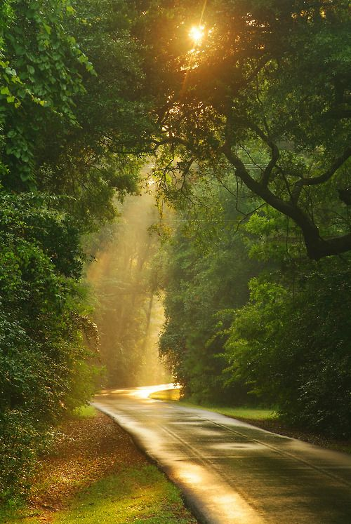 I love a sunlit road wet from a spring shower. It always makes me want to go for a ride.