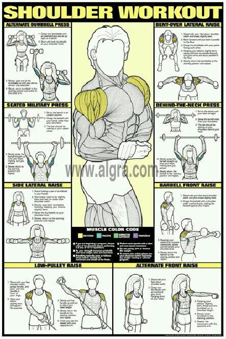 Musculación deltoides