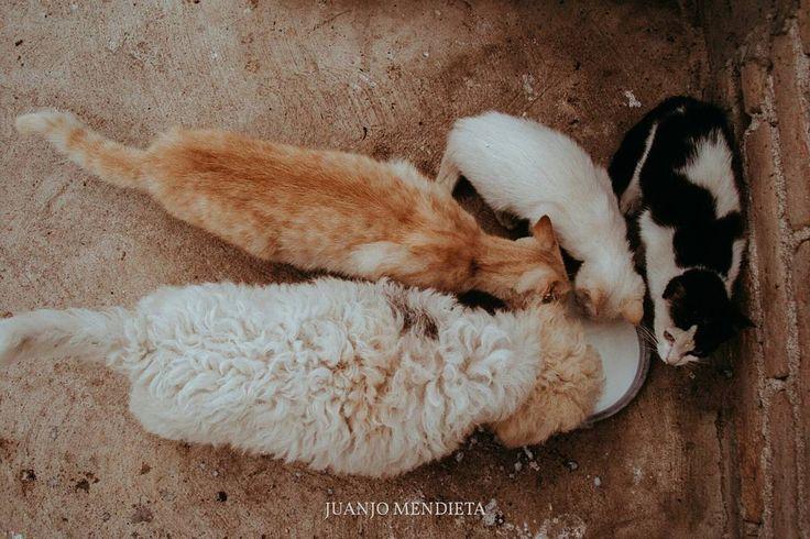 Aquí todos somos familia. #gatito #gatitos #gatos #gato #animales #mascotas #familia #perros #adopcion #adopta #adopción #feliz #amigos #felicidad #vacaciones #vida #amor #salud #paz #alegria #méxico #cultura #turismo #viajar #viajes