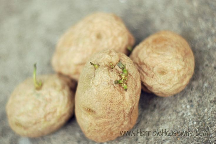 how to grow yukon gold potatoes in containers