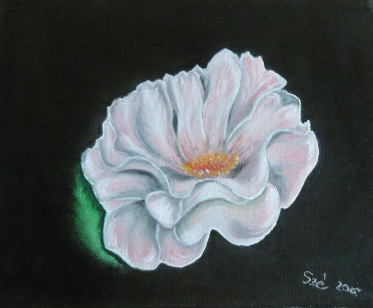 created by: Kovácsné Sz. Éva - rose - oil, 30x25 cm canvas  (Original painting: The Beauty of Oil Painting Series 1, Episode 5: English Roses, Farbi Flora Television , You tube)