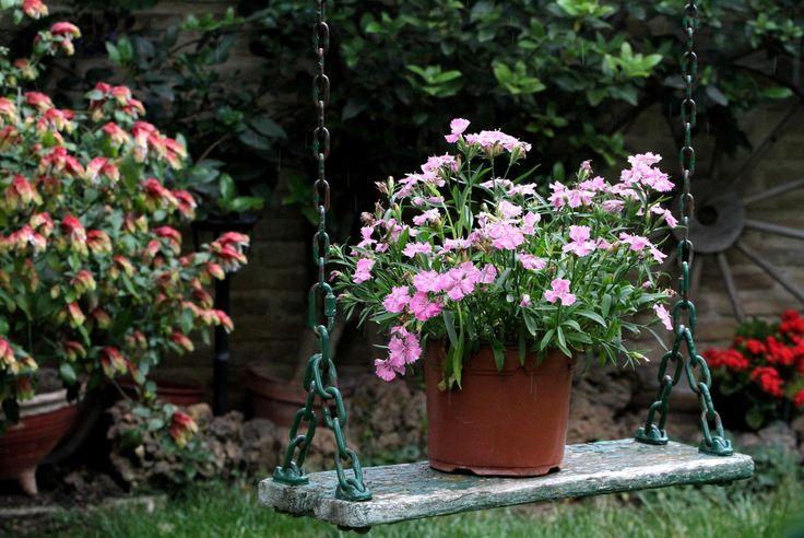 Κατηγορία: Κήποι - Γιώργος