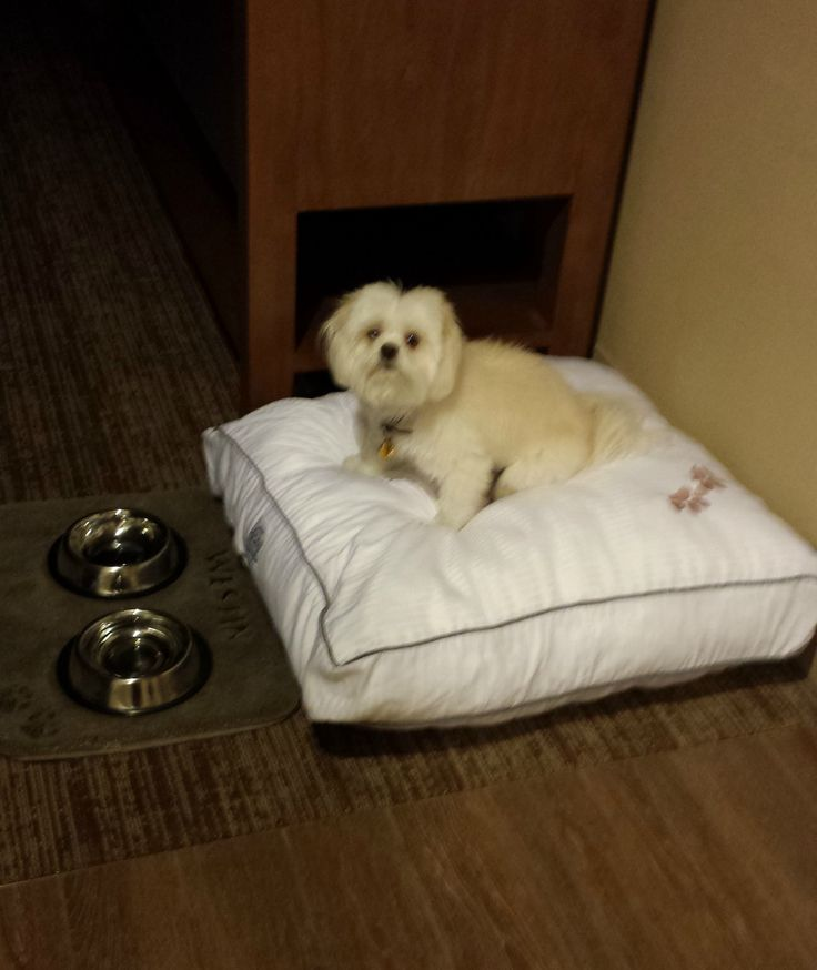 One of our  guests  enjoying his Westin Heavenly Dog Bed  The Westin La17 best Rest   Relaxation images on Pinterest   Dallas  3 4 beds  . Dog Friendly Places To Stay Bath. Home Design Ideas