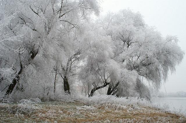 Winter im Stadtpark (Insel Rotehorn-Werder, Magdeburg/Sachsen-Anhalt, Germany) - Wintertime at city-park (island Rotehorn-Werder, Magdeburg/Saxony-Anhalt, Germany) by pinguin1961, via Flickr