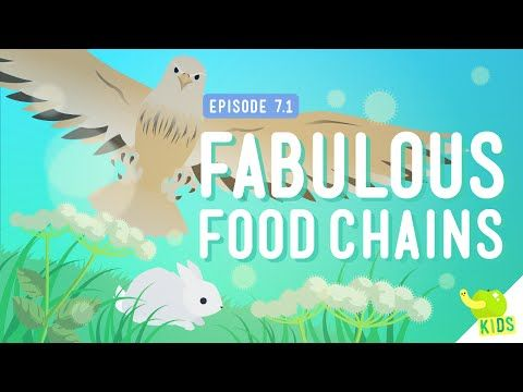 Fabulous Food Chains: Crash Course Kids #7.1 by thecrashcourse: Everyone eats, right? But how does that food get the energy to power you? In this episode of Crash Course Kids, Sabrina talks about the way energy moves, or flows, through an ecosystem and how that movement forms Food Chains! Support at: http://patreon.com/crashcourse