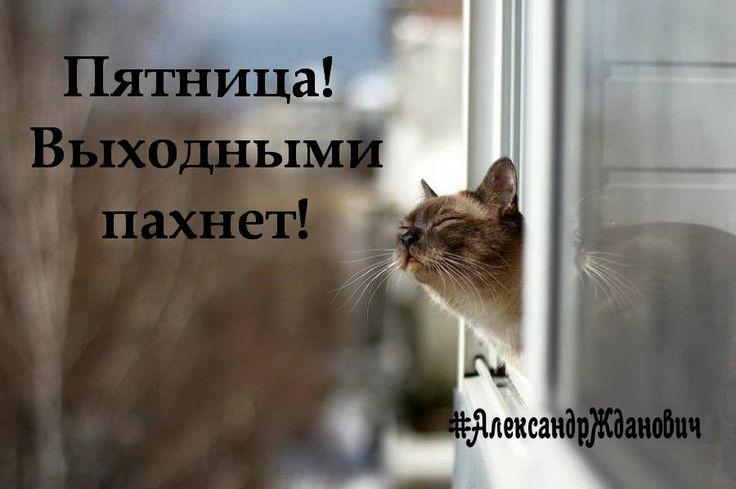 С пятницей, друзья!  #АлександрЖданович #позитив #пятница #выходнымипахнет #пятницапришла