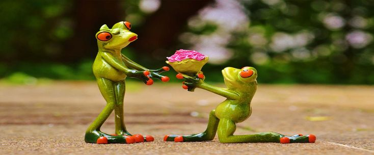 grenouille-mariée
