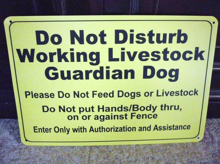 Livestock Guardian Dog Do Not Disturb 2 Two Lgd