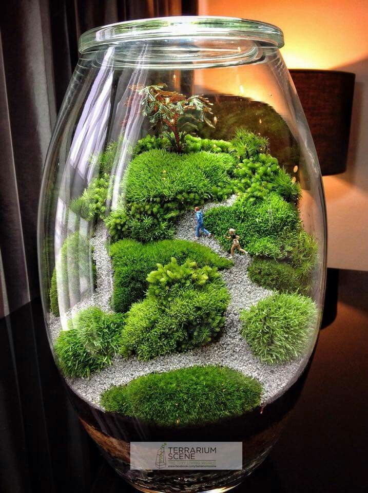 best 25 terrarium ideas on pinterest diy terrarium terranium ideas and terrarium diy. Black Bedroom Furniture Sets. Home Design Ideas
