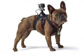 gopro chien dog
