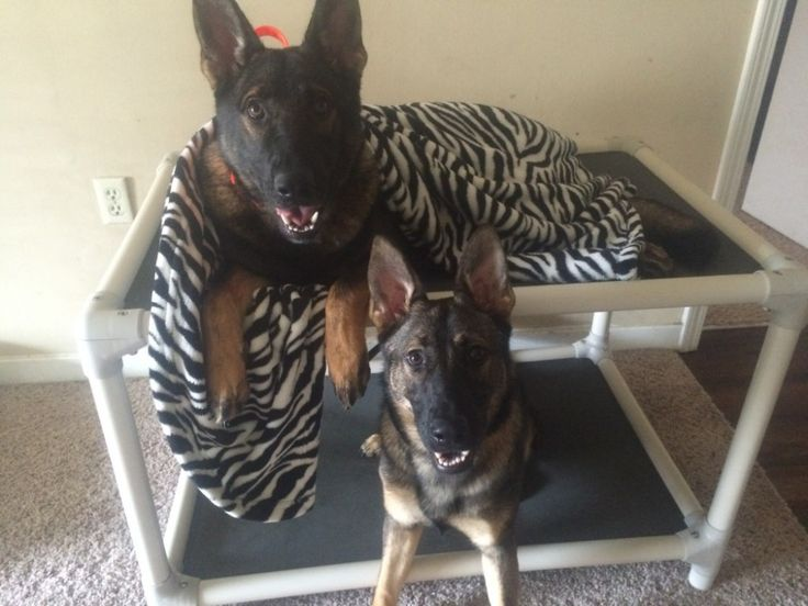 standard dog bunk beds are high quality chew proof dog beds that are both easy to clean and comfortable