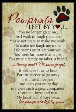 Many people refuse to love a dog again ... it is the only way for one's heart to heal. Promise.