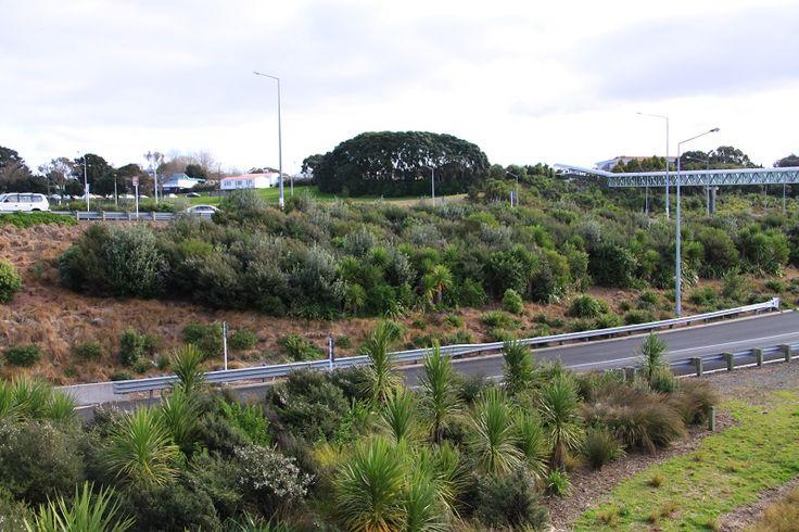 Esmonde Road - Kauri Park