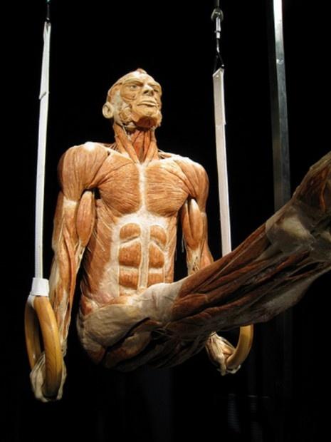 Go to a Body World museum display | Bucketlist | Pinterest ...